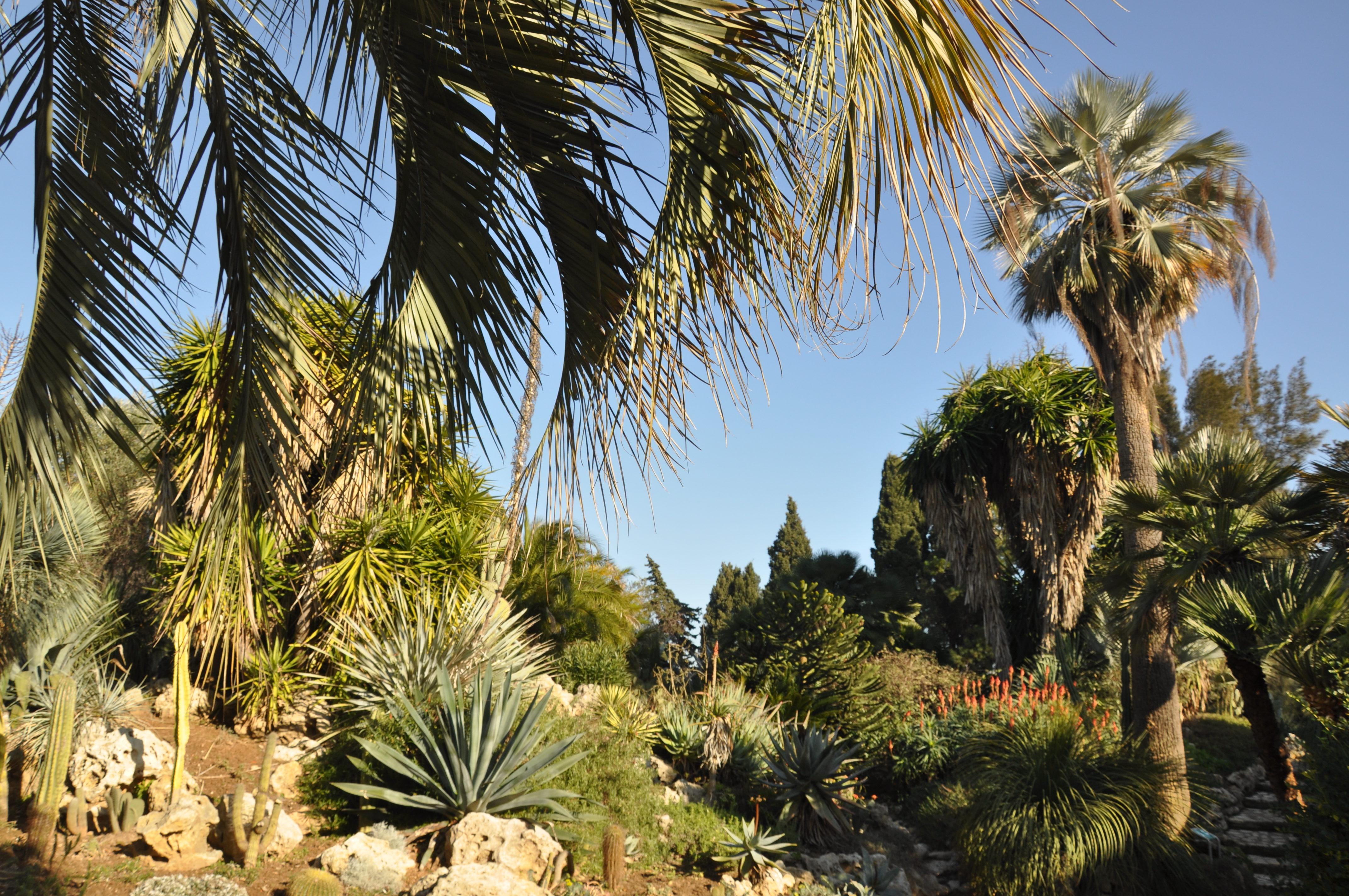 Des jardins remarquables office de tourisme d 39 hy res for Jardin a visiter
