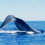 A la rencontre des mammifères marins