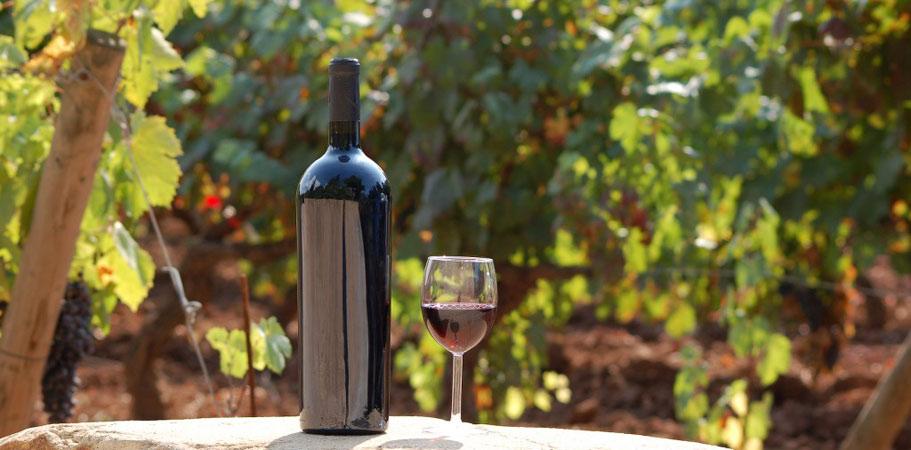 Découverte en groupe d'un domaine viticole au pradet