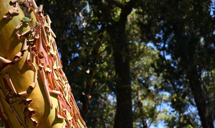 Le plantier de Costebelle – jardin remarquable