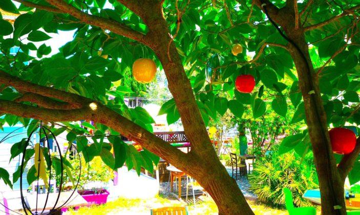 Restaurant hyeres tapas almanarre concert l'estive