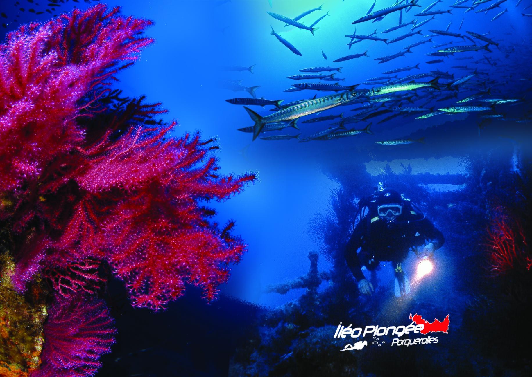 Plongée île Porquerolles Parc national
