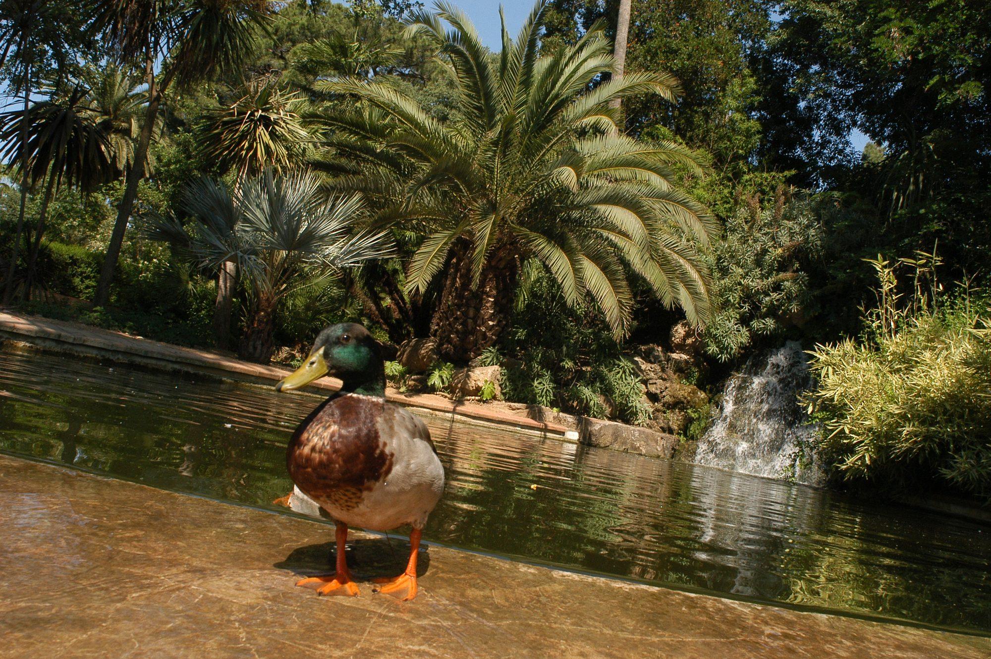 Parc olbius riquier hy res patrimoine culturel for Jardin olbius riquier