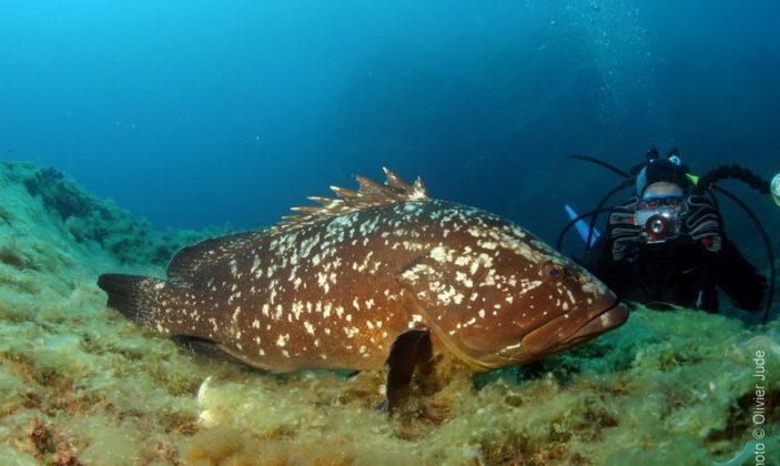 Sun Plongée Baptêmes Exploration sous-marine Ile de Port-Cros Parc National