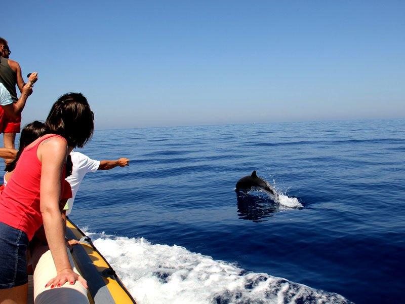 Au large avec les dauphins