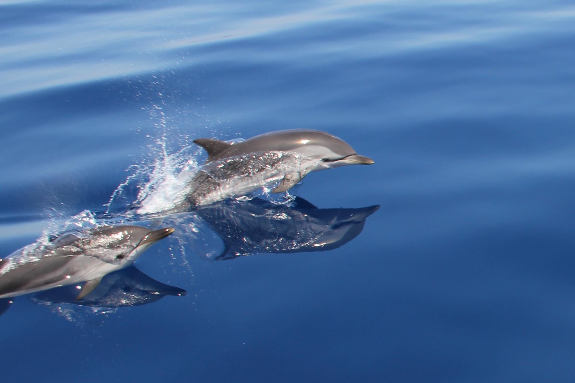 Vertical Horizon – observation baleines et dauphins