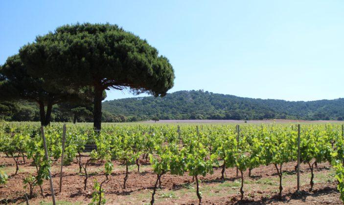 Domaine de la Courtade vin de l'île de Porquerolles