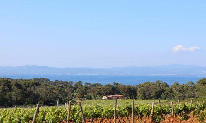 Domaine viticole île Porquerolles dégustation vin bio Parc National