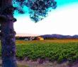Chateau de Mauvanne Hyères vin vignoble