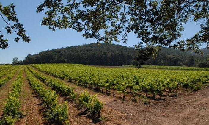 Domaine Bouisse Matteri vignoble vin