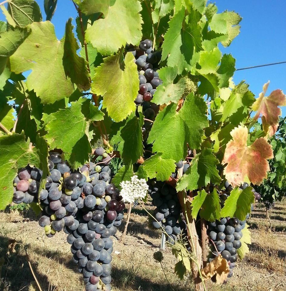 Domaine de Sauvebonne Hyères vin vignoble