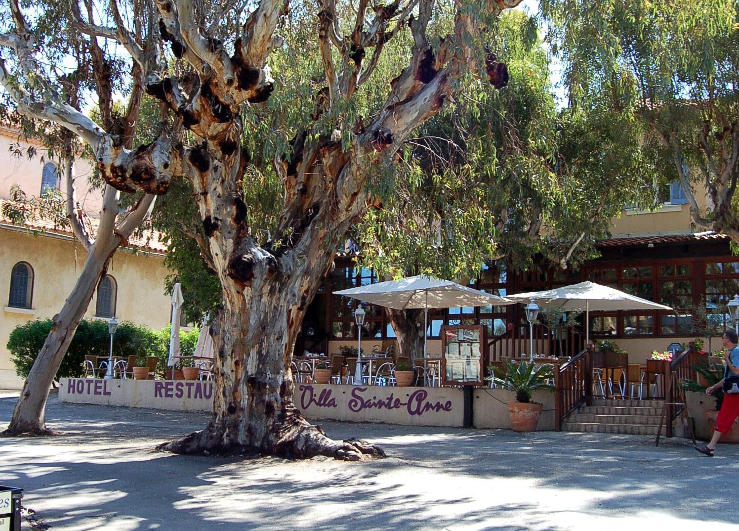 Villa sainte anne hy res restaurant office de - Office du tourisme ile de porquerolles ...