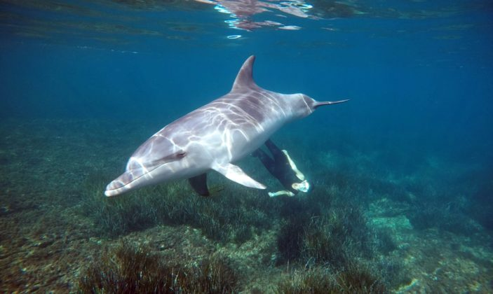 Randomarine notre copain le dauphin