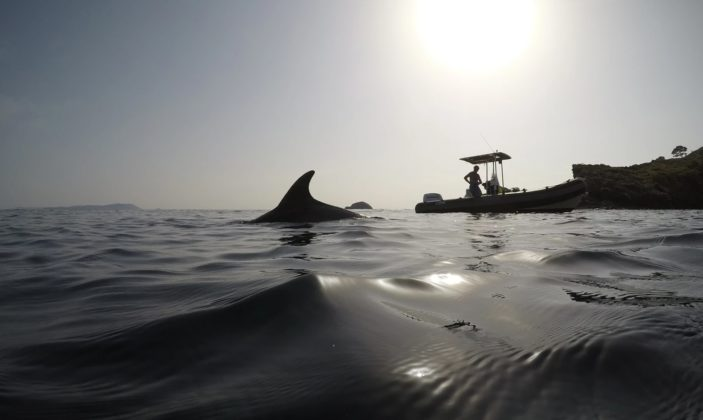 Randomarine le fameux dauphin