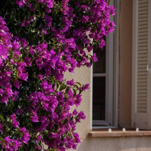 Location Studio Porquerolles Esquinado junior Ile de Porquerolles