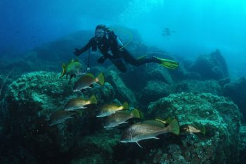 Plongée pointe de la Galère à Port-Cros