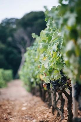 Domaine viticole île de porquerolles