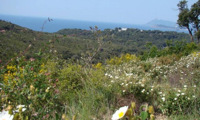Vue de la mer depuis la Colle Noire / sea view from La Colle Noire