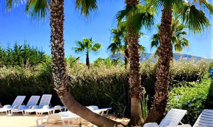 Palmiers piscine