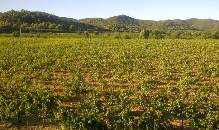 vue du Victoria 3 sur le vignoble