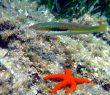 Espace Mer Club de plongée Hyères presqu'île de Giens Tour Fondue