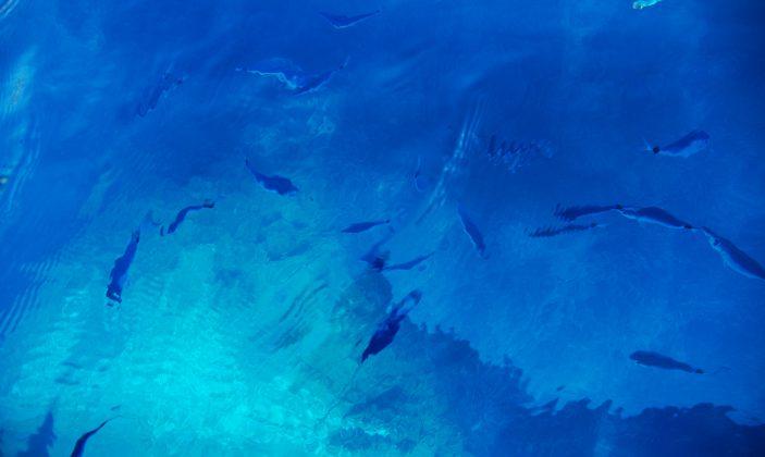 îles d'or évasion – balades en mer