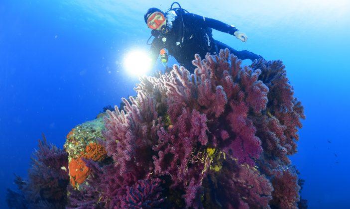 Plongée avec le Gîte de plongée du Gapeau