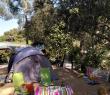 camping Le Pin de galle