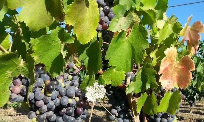 Domaine de la sauvebonne vin hyeres