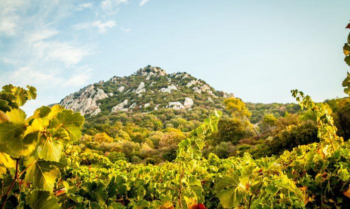 Domaine Filhea – Hyères – au pied du mont Fenouillet – La Bayorre