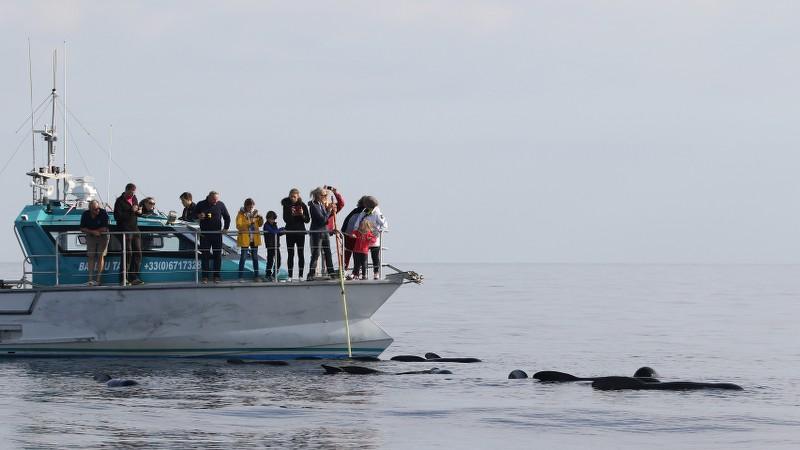 Sortie Observation des cétacés Espace Mer