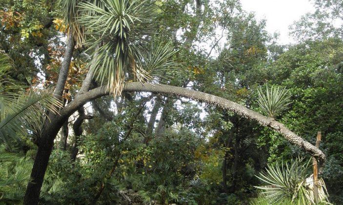 Le plantier de Costebelle-Jardin remarquable hyeres