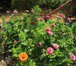 La jardinière des pollinisateurs