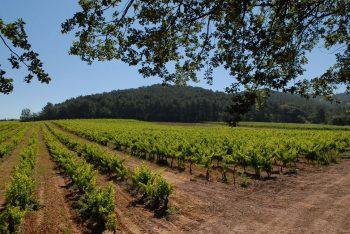 Domaine Bouisse Matteri vignoble vin Hyeres