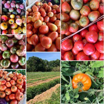 Producteur Fruits & Legumes