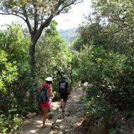 Balade nature accompagnée à Port-Cros avec Vincent Blondel